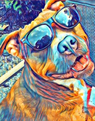 Paint A Pup
