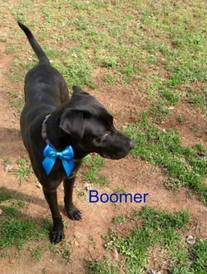 Boomer picture 3